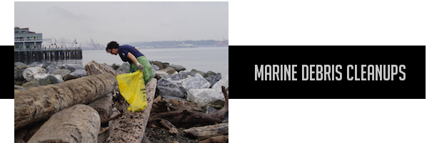 Marine Debris Cleanups