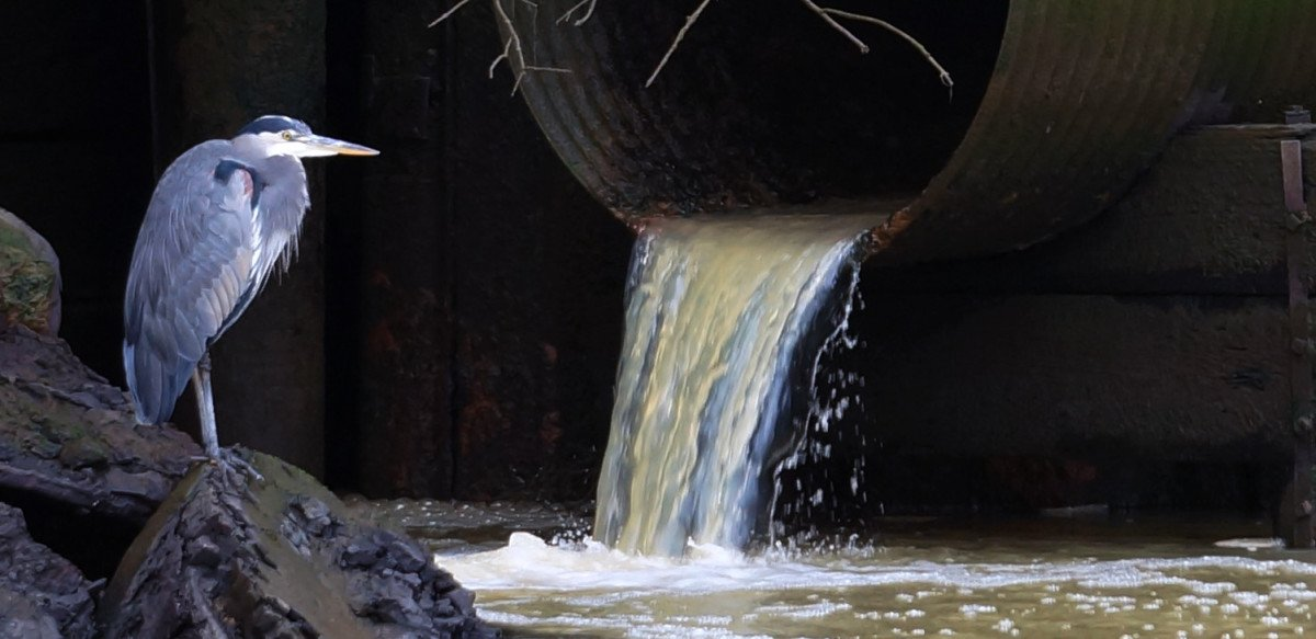 What are the effects of stormwater runoff entering the puget sound.?