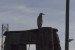 heron-lookout