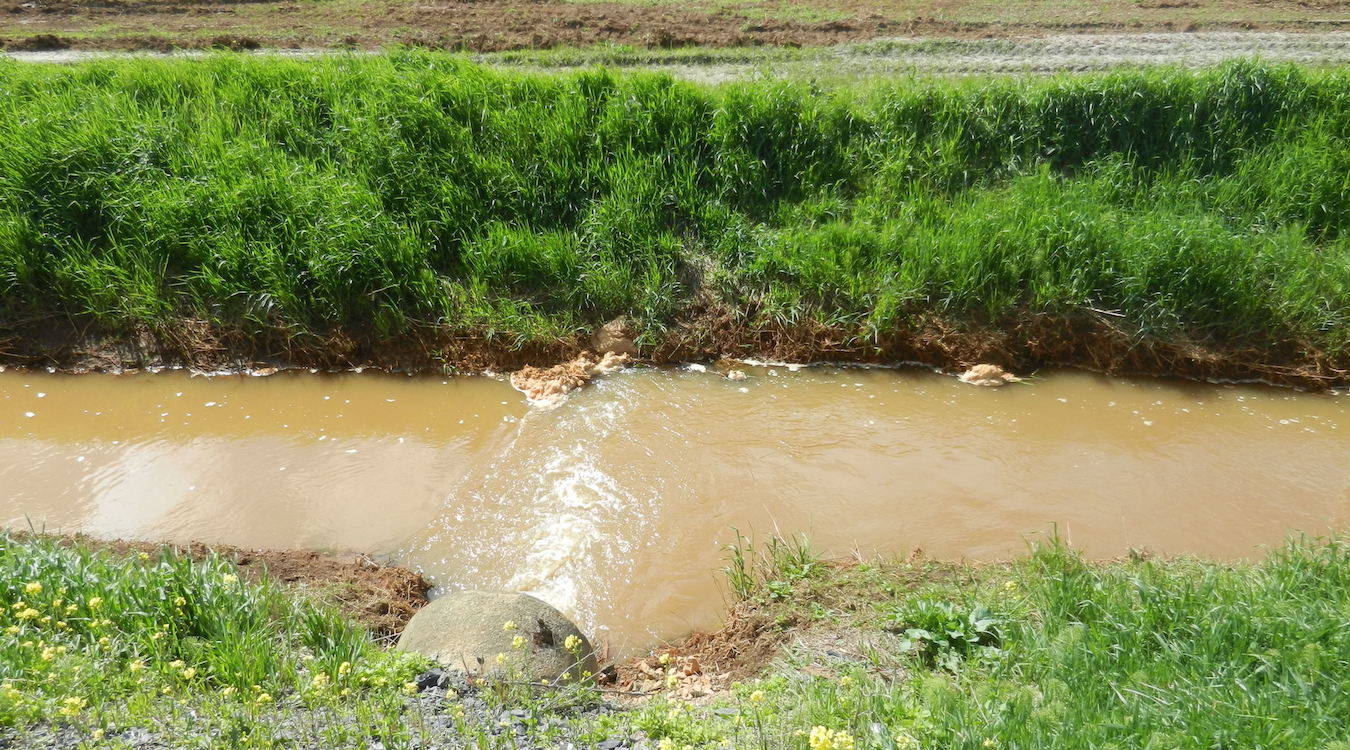 An outfall dumps into a stream that drains agricultural land. The stream is brown with sediment.